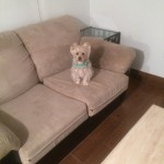 Redwood-City-Sofa-Pet-Stain-Cleaning